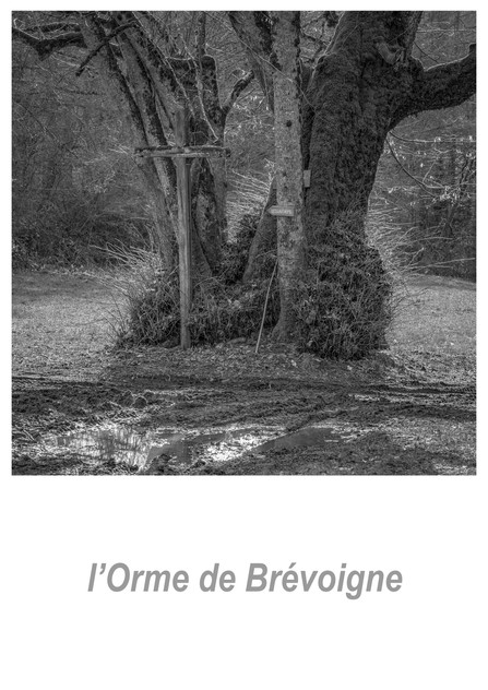 l'Orme de Brévoigne 1.8w.jpg