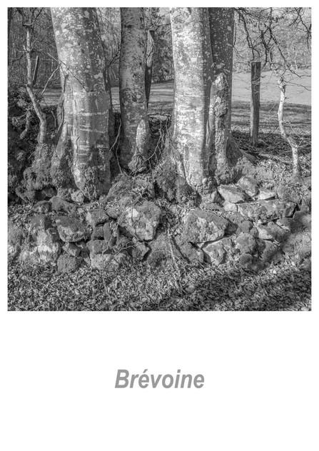 Brévoine_1.5w.jpg