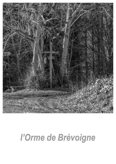 l'Orme de Brévoigne 1.1w.jpg