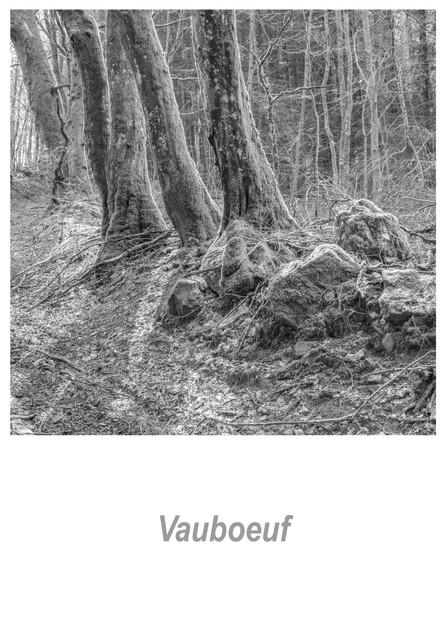 Vauboeuf 1.2w.jpg