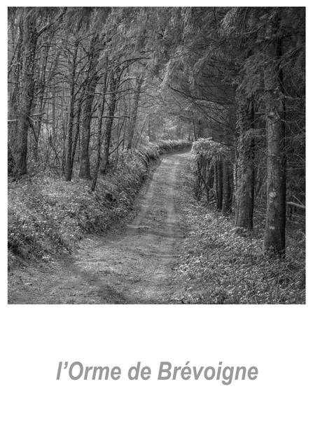 l'Orme de Brévoigne 1.2w.jpg