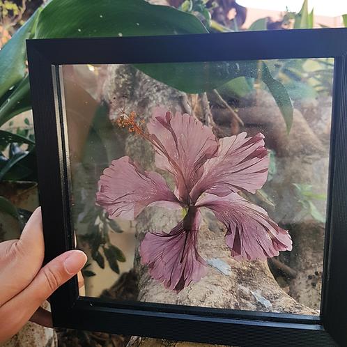 Quadro Botânico Flor
