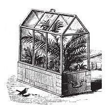 Quels sont les origines du terrarium ?