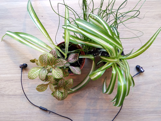 Vos plantes aiment-elles la musique ?