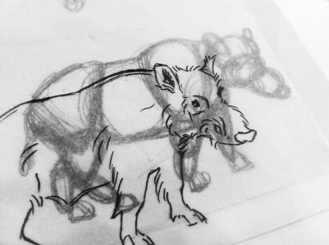 Zeichnungskurs: Zoologisches Museum