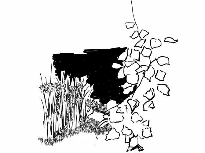 Zeichnungskurs: Stadtgärtnerei