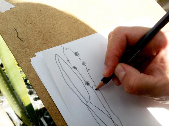 Zeichnungskurs: Alles Kaktus!