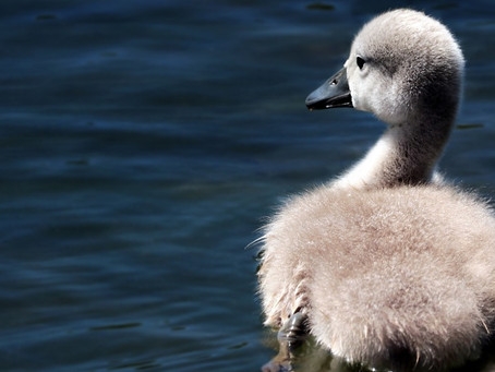 The Ugly Duckling: Is it worth sacrificing beauty for results?