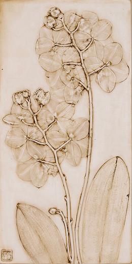 Fertility: Orchids