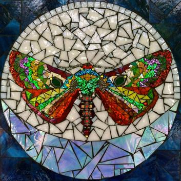 Serenbe Moth