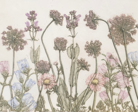 The Garden of Friendship: Queen Ann's Lace, Penstemon, Gerber Daisy, Campanula