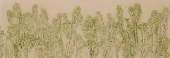 The Sacred Grove: Bolted Broccoli