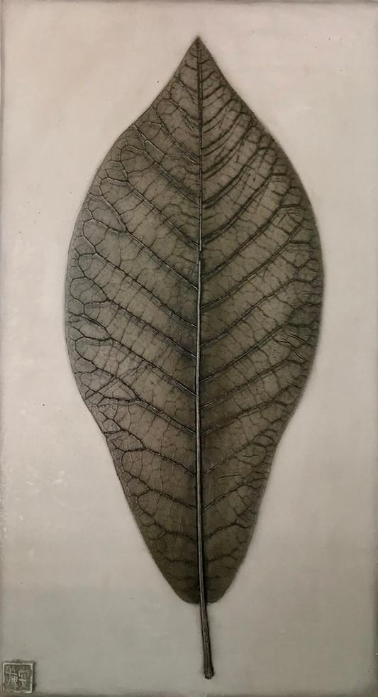 Integrity: Magnolia Leaf
