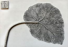 Falling for You: Begonia Leaf