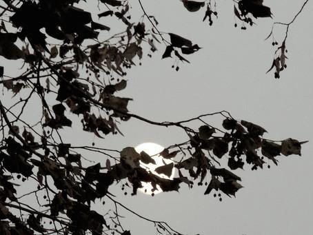 Uposatha: lune d'automne