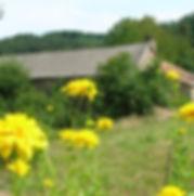 fleurs jaunes web.jpg