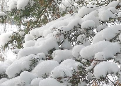 neige - copie 2.jpg