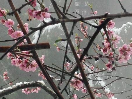 Nuit de printemps, impromptu