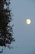 Lever de lune liliane 2.jpg