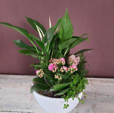 Desde 30€ - Composicion plantas