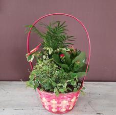 Desde 20€ - Cesta Plantas