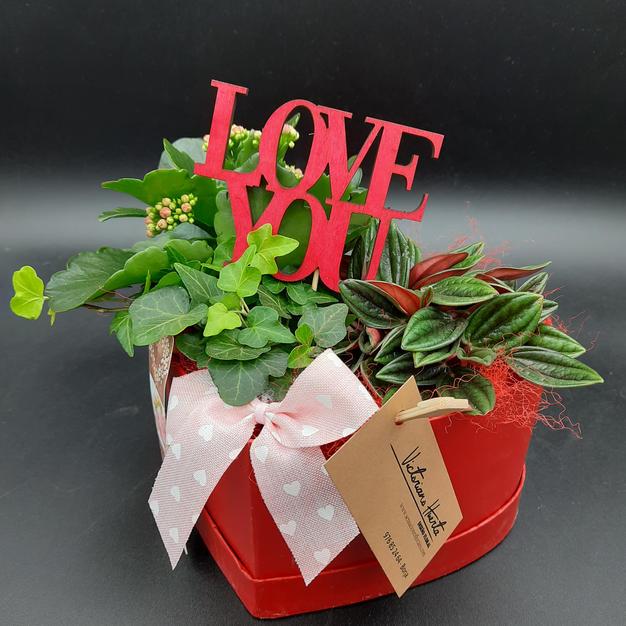 23€ - Composición plantas
