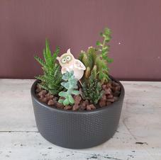 33€ - Composicion de cactus