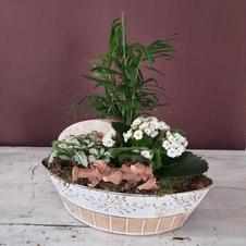 Desde 22€ - Composicion plantas