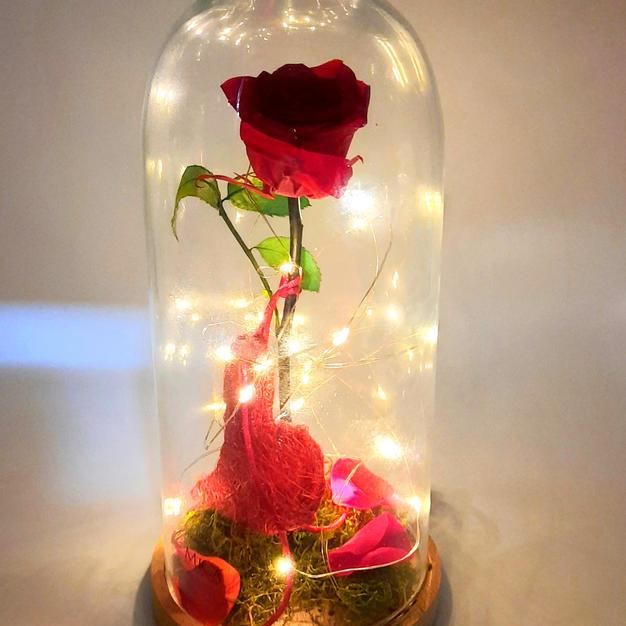 32€ - Cúpula Rosa eterna