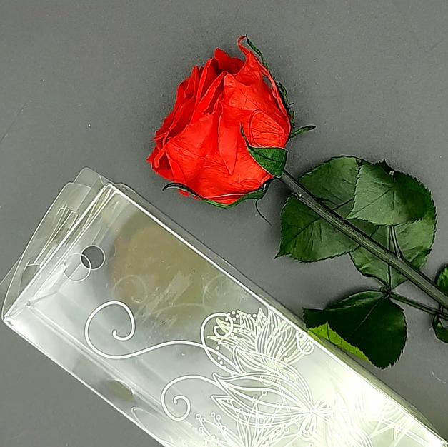 13€ - Rosa Preservada