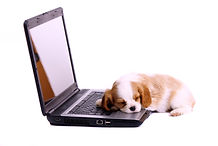 puppy with head on laptop