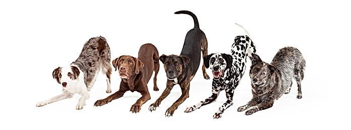 dog training.jpeg