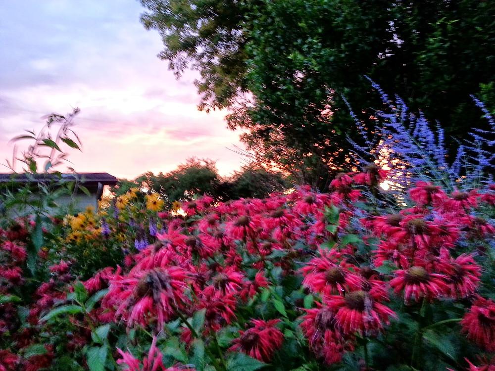 bright color garden.jpg