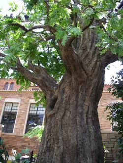 Weatherproof Tree, Colorado Shakes