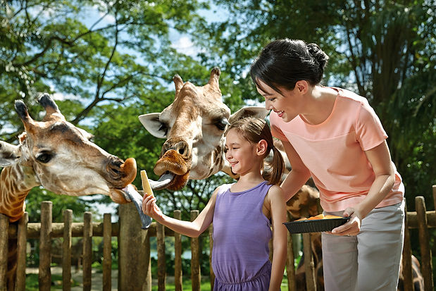 ATTRACTIONS-SINGAPORE-ZOO.jpg