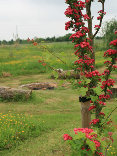 field of healing in bloom May 2012