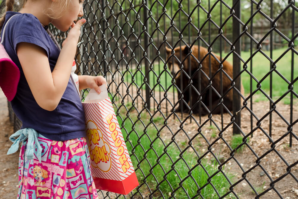 Child eating popcorn in front of bear at the popcorn park zoo