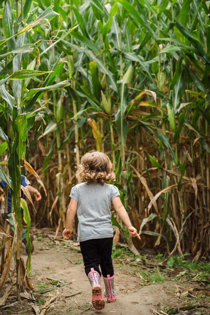 girl running in corn maze at milky way farm