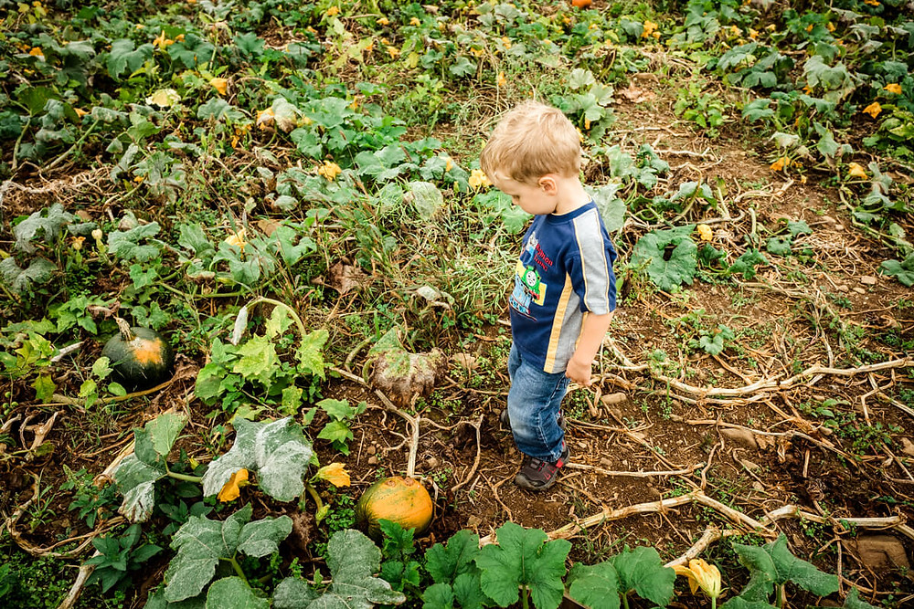 little boy and pumpkin at milky way farm