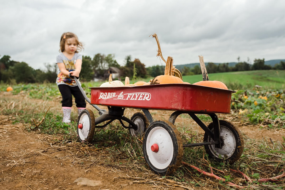 Girl pulling wagon at milky way farm
