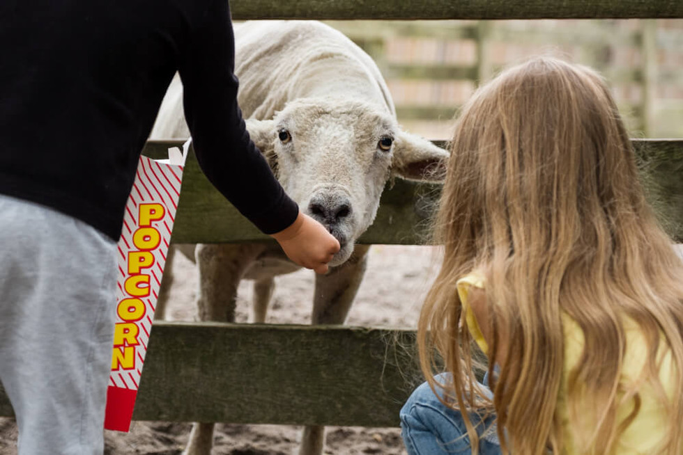 What's not to love about the Popcorn Park Zoo?