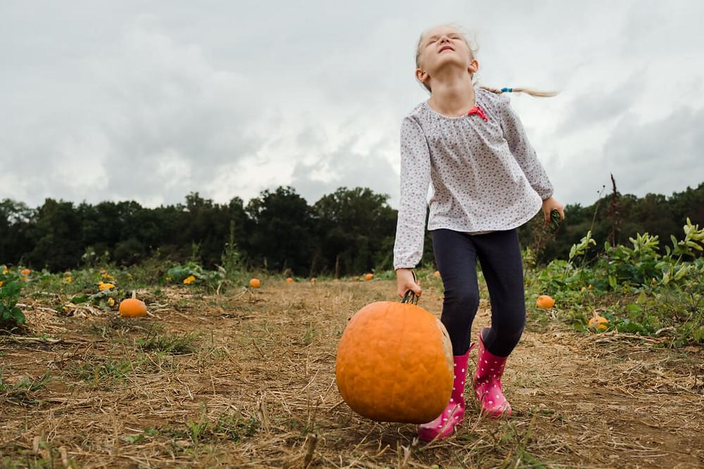 Girl lifting a heavy pumpkin at milky way farm