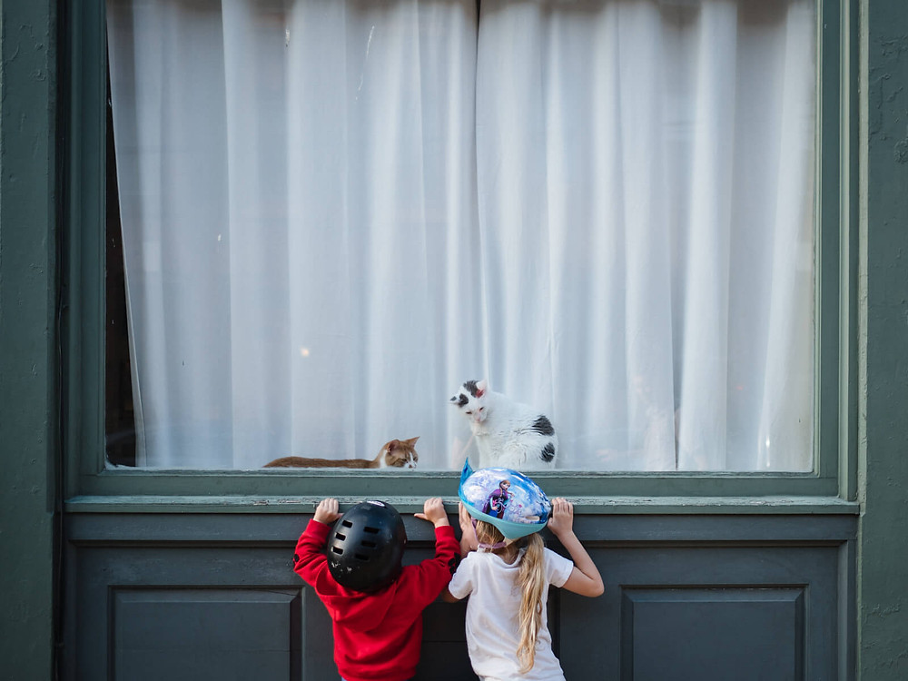 children looking at cats in window