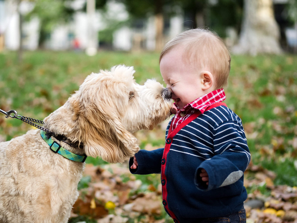 dog licking toddler's face in washington square