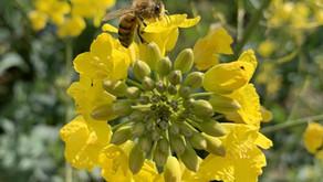 Combien de fleurs visite une abeille chaque jour ?