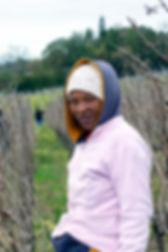 vigne afrique du sud cap town KristelM galeriekm