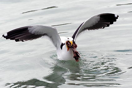 oiseau galeriekm kristelm photo
