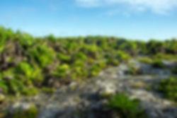 mexique sauvage tulum cactus mexico paysage aride