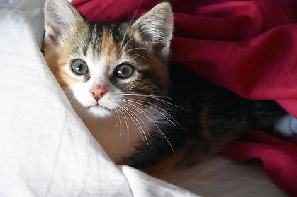 Naé chat chaton #insta