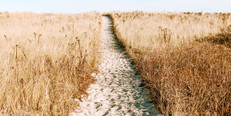 Counting the Omer: Pause to Bless the Everyday, Small Harvest